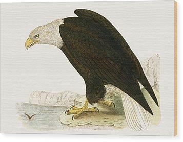 Bald Eagle Wood Print by English School