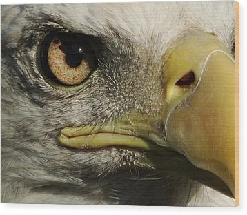 Bald Eagle Eye Wood Print