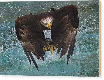Bald Eagle In Flight Wood Print by Dean Bertoncelj