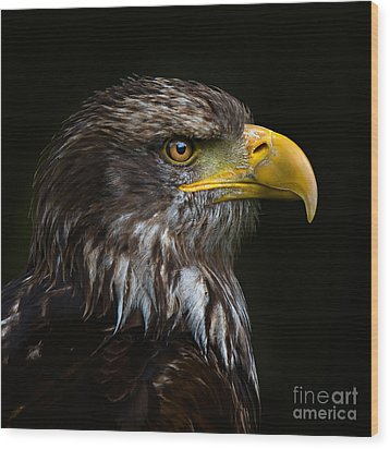 Bald Eagle Wood Print by Joerg Lingnau