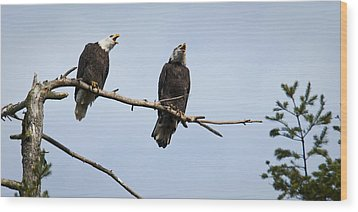 Bald Eagle Music Wood Print by Chad Davis