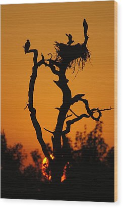 Wood Print featuring the photograph Bald Eagle Nestling At Sunset by Lynda Dawson-Youngclaus