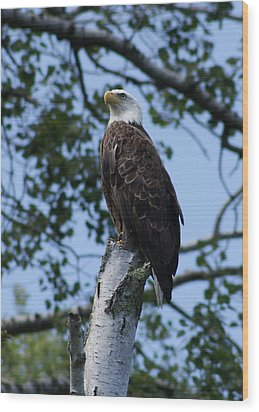 Bald Eagle On The Brule Wood Print by Ron Read