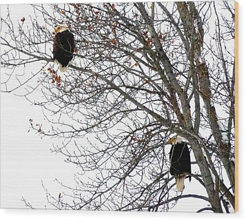 Wood Print featuring the photograph Bald Eagle Pair by Will Borden