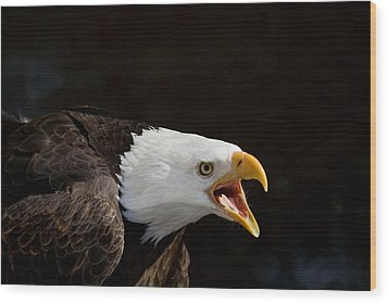 Bald Eagle Portrait 2 Wood Print by Laurie With