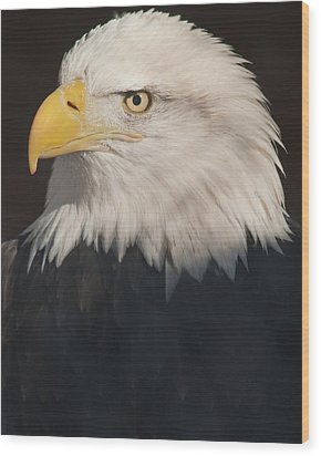 Bald Eagle Portrait Wood Print by Harry Strharsky