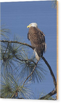 Wood Print featuring the photograph Bald Eagle by Sally Weigand