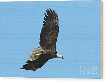 Wood Print featuring the photograph Bald Eagle Series IIi by Deborah Benoit