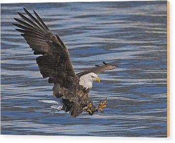 Bald Eagle Strike Wood Print