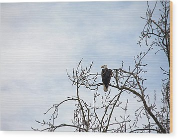 Wood Print featuring the photograph Balk Eagle by Rebecca Cozart