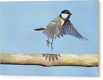 Ballerina Bird Wood Print by Marcel ter Bekke