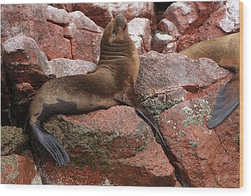 Wood Print featuring the photograph Ballestas Island Fur Seals by Aidan Moran