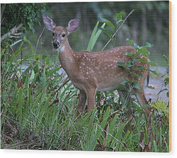 Wood Print featuring the photograph Bambi by Rick Friedle
