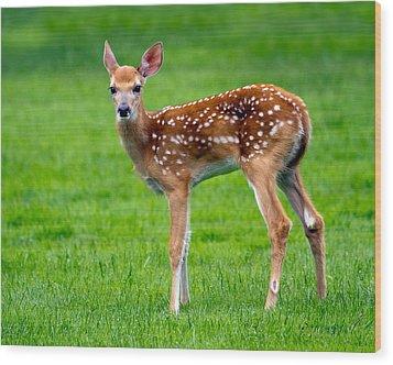 Bambi Wood Print by Timothy McIntyre