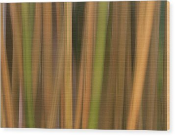 Bamboo Abstract Wood Print by Carolyn Dalessandro