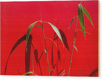 Bamboo Against Red Wall Wood Print