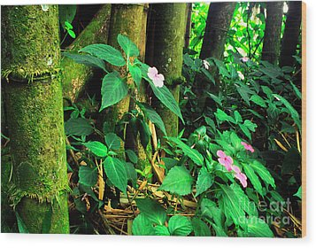 Bamboo And Impatiens El Yunque National Forest Wood Print by Thomas R Fletcher