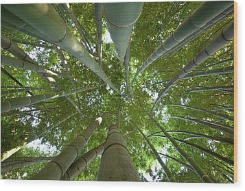 Bamboo Forest Wood Print by Tom Clabough