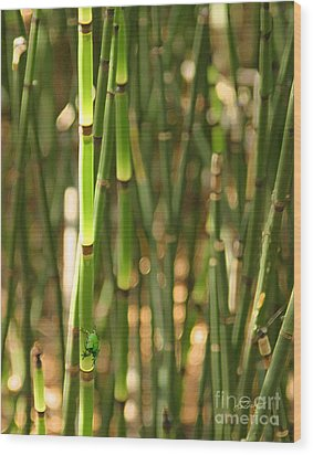 Bamboo Frog Wood Print
