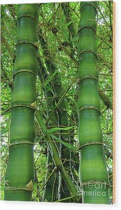 Bamboo Wood Print by Loriannah Hespe
