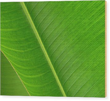 Banana Leaf Abstract Wood Print
