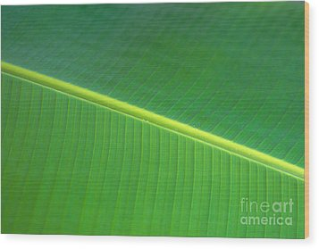 Banana Leaf Wood Print by Dana Edmunds - Printscapes