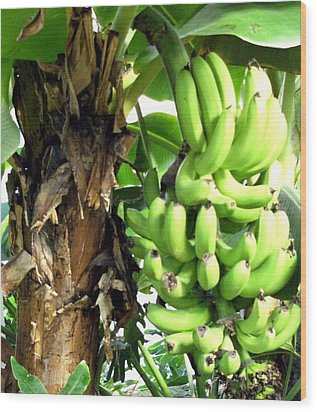 Banana Wood Print by Mindy Newman