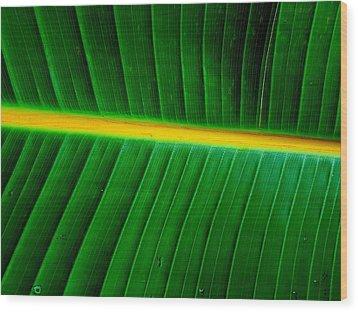 Banana Plant Leaf Wood Print
