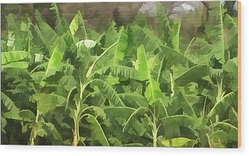 Banana Plantation Wood Print by Lanjee Chee