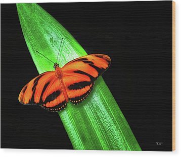 Banded Orange Longwing Wood Print