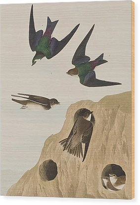 Bank Swallows Wood Print by John James Audubon