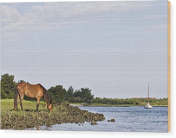 Wood Print featuring the photograph Banker Horse Along Taylors Creek by Bob Decker