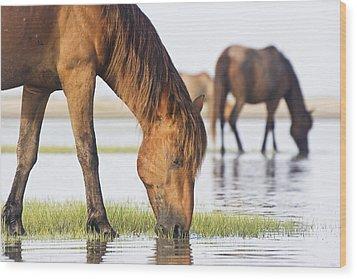 Banker Horses On Tidal Flat Wood Print