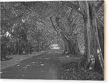 Banyan Street 2 Wood Print by HH Photography of Florida