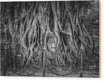 Banyan Tree Wood Print by Adrian Evans