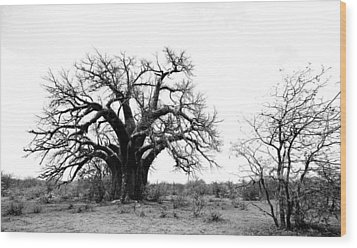 Baobab Landscape Wood Print by Bruce J Robinson