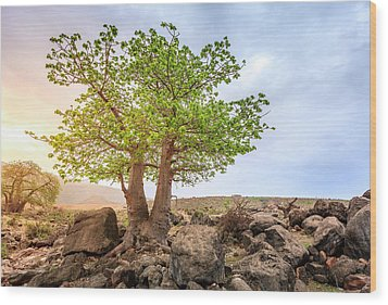 Wood Print featuring the photograph Baobab Tree by Alexey Stiop