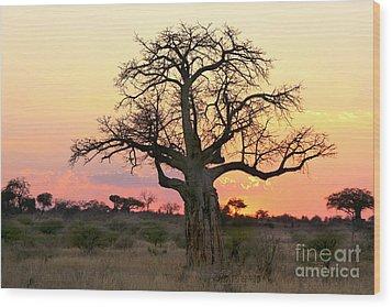 Baobab Tree At Sunset  Wood Print