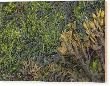 Bar Harbor Maine Coastal Life Wood Print