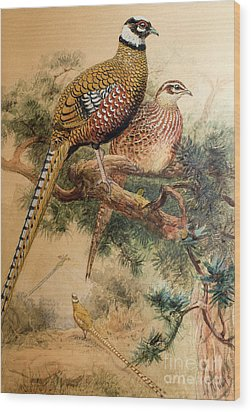 Bar-tailed Pheasant Wood Print by Joseph Wolf