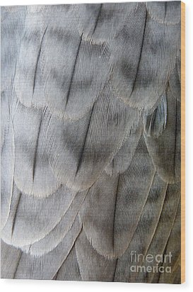 Barbary Falcon Feathers Wood Print