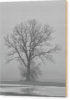 Bare Tree In Fog Wood Print by Nancy Landry