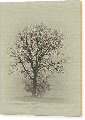 Bare Tree In Fog- Nik Filter Wood Print by Nancy Landry