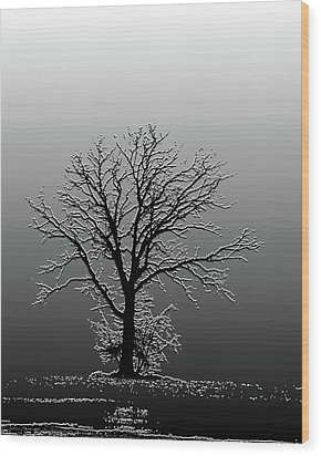 Bare Tree In Fog- Pe Filter Wood Print by Nancy Landry