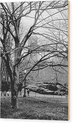 Bare Tree On Walking Path Bw Wood Print by Sandy Moulder