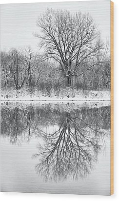 Wood Print featuring the photograph Bare Trees by Darren White