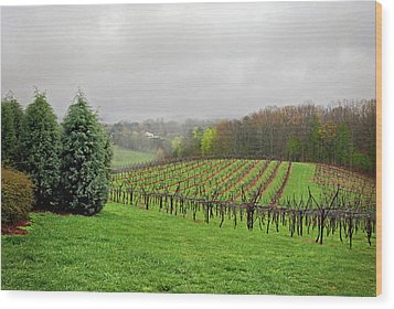Bare Vineyard Wood Print