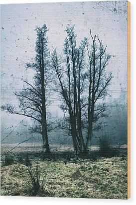 Bare Winter Trees Wood Print by Karen Stahlros