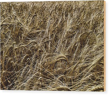 Wood Print featuring the photograph Barley by RKAB Works