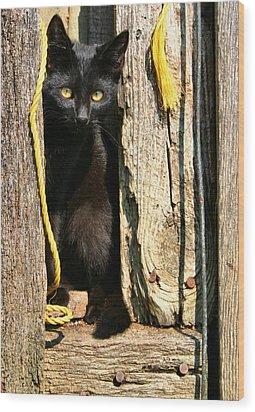 Barn Cat Wood Print by Kristin Elmquist